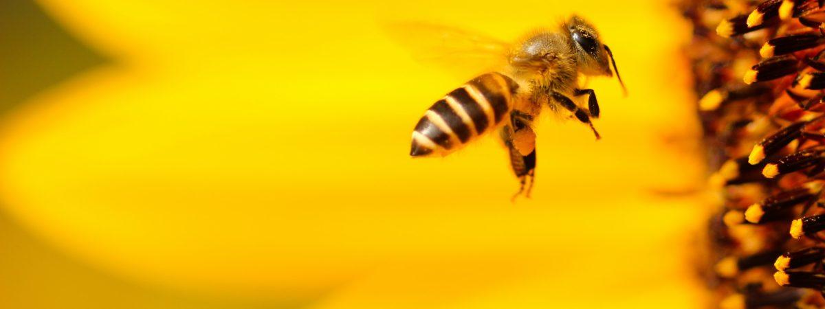 czy 5G zabija pszczoły